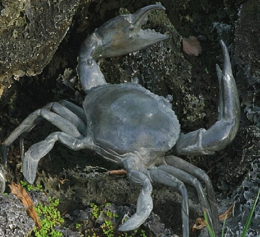 Extra Large Real Bronze Crab Sculpture