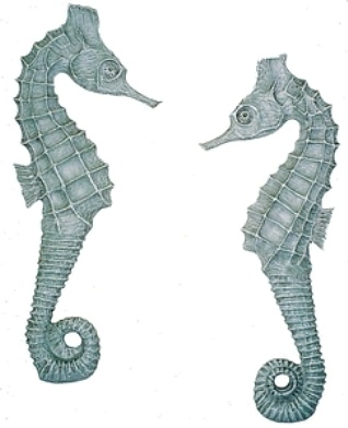 Decorative Seahorse Wall Sculptures - Indoor